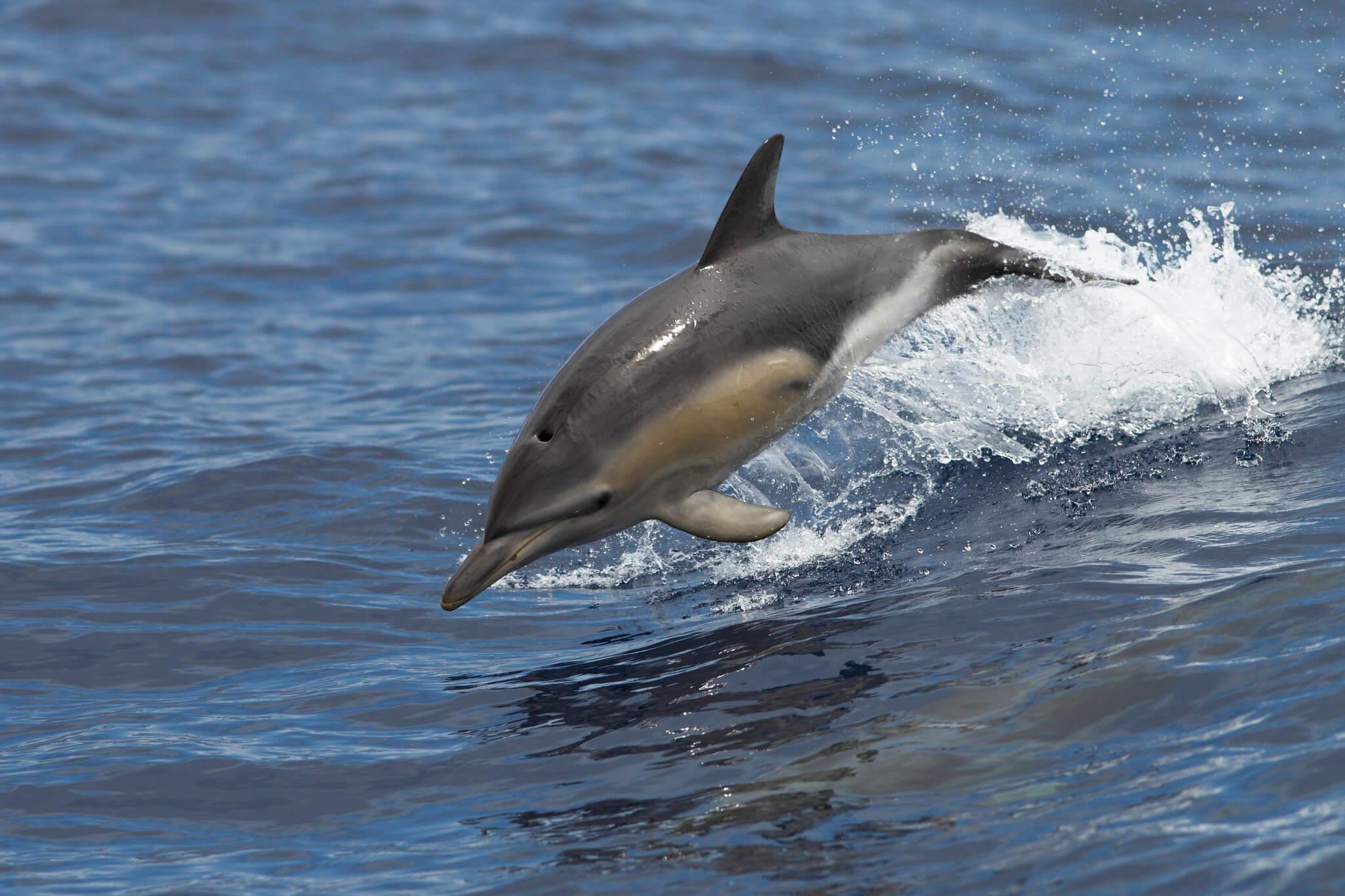 Comunicat de presă depunere petiție delfinariu