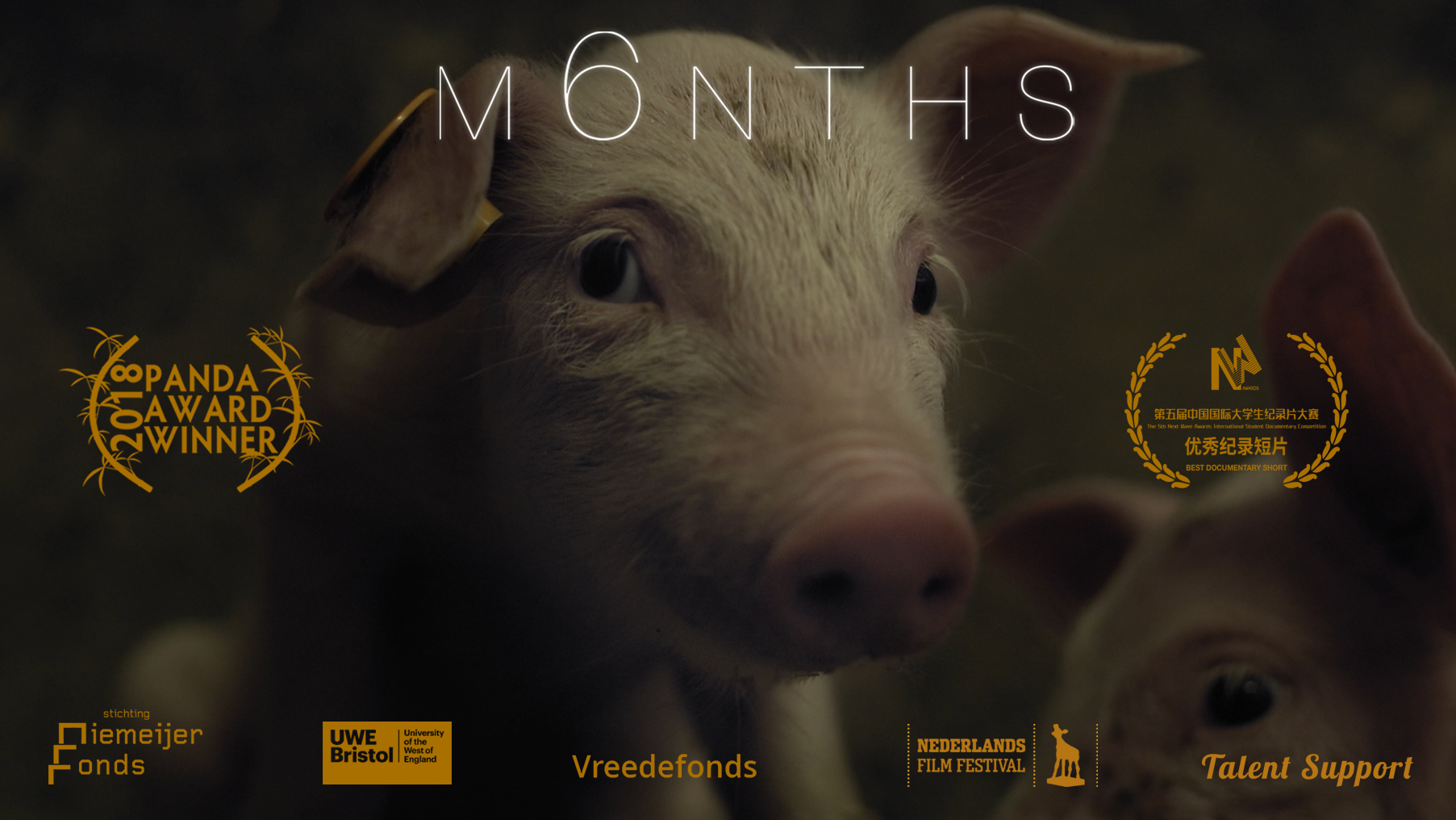 M6nths: viața unui porc dintr-o fermă industrială