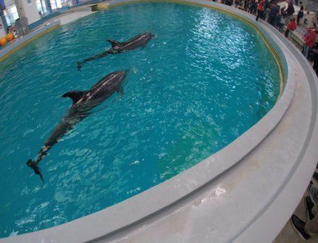 Protest pașnic la delfinariul din Constanța