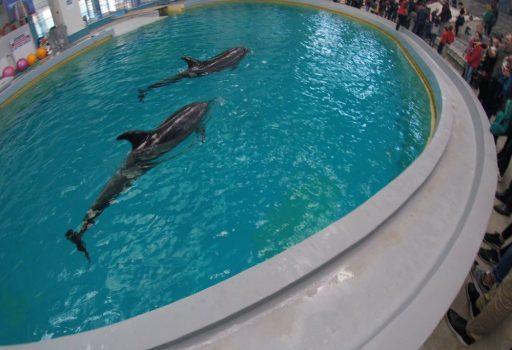 Ni-Ni și Chen-Chen, delfinii captivi ai delfinariului din Constanța