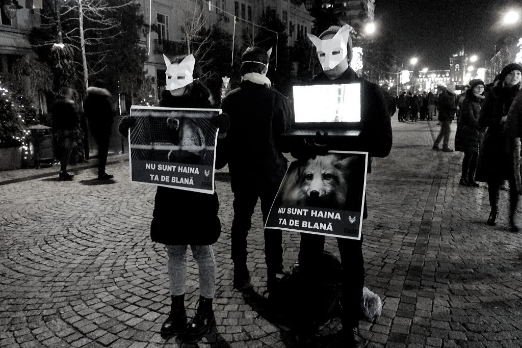 Acțiune anti-blană Iași 2018 (F.R.E.E.)