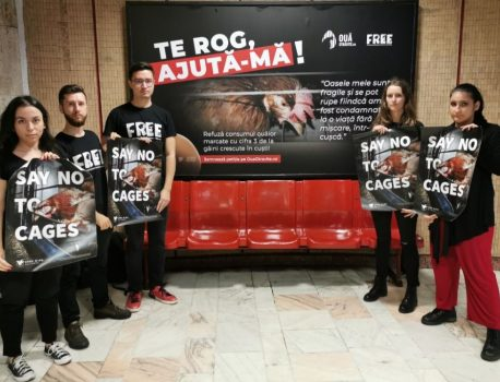 Reacțiile românilor la campania împotriva ouălor marcate cu cifra 3