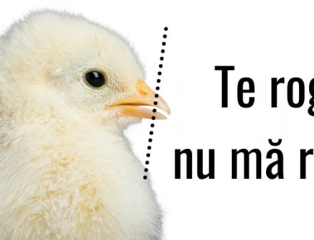 Practica tăierii ciocului în fermele de ouă
