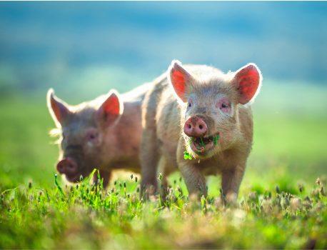 ONG-ul românesc care luptă pentru drepturile tuturor animalelor