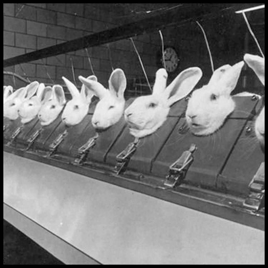 Teste pe animale